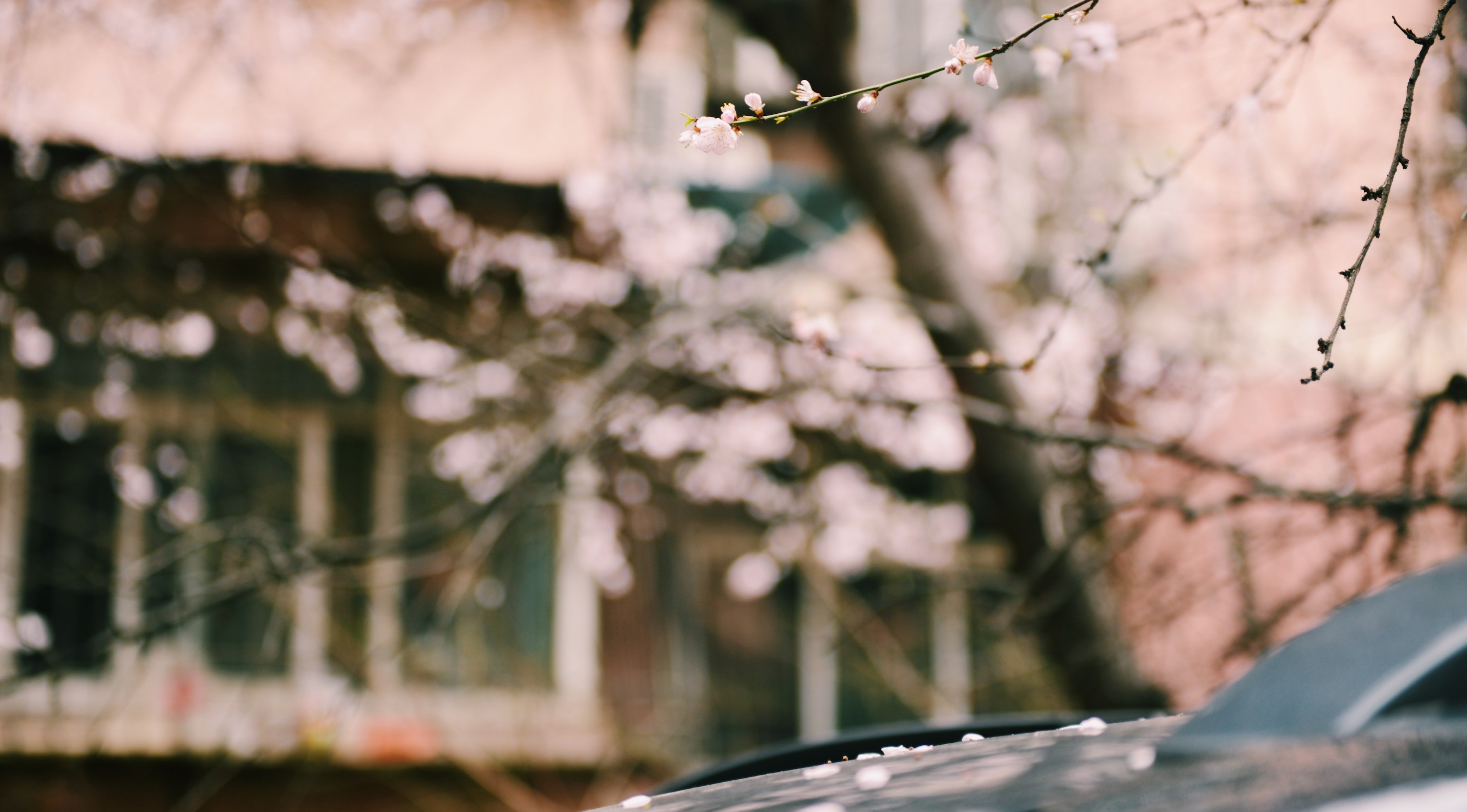 Tips for Buying or Selling a Home in Spring