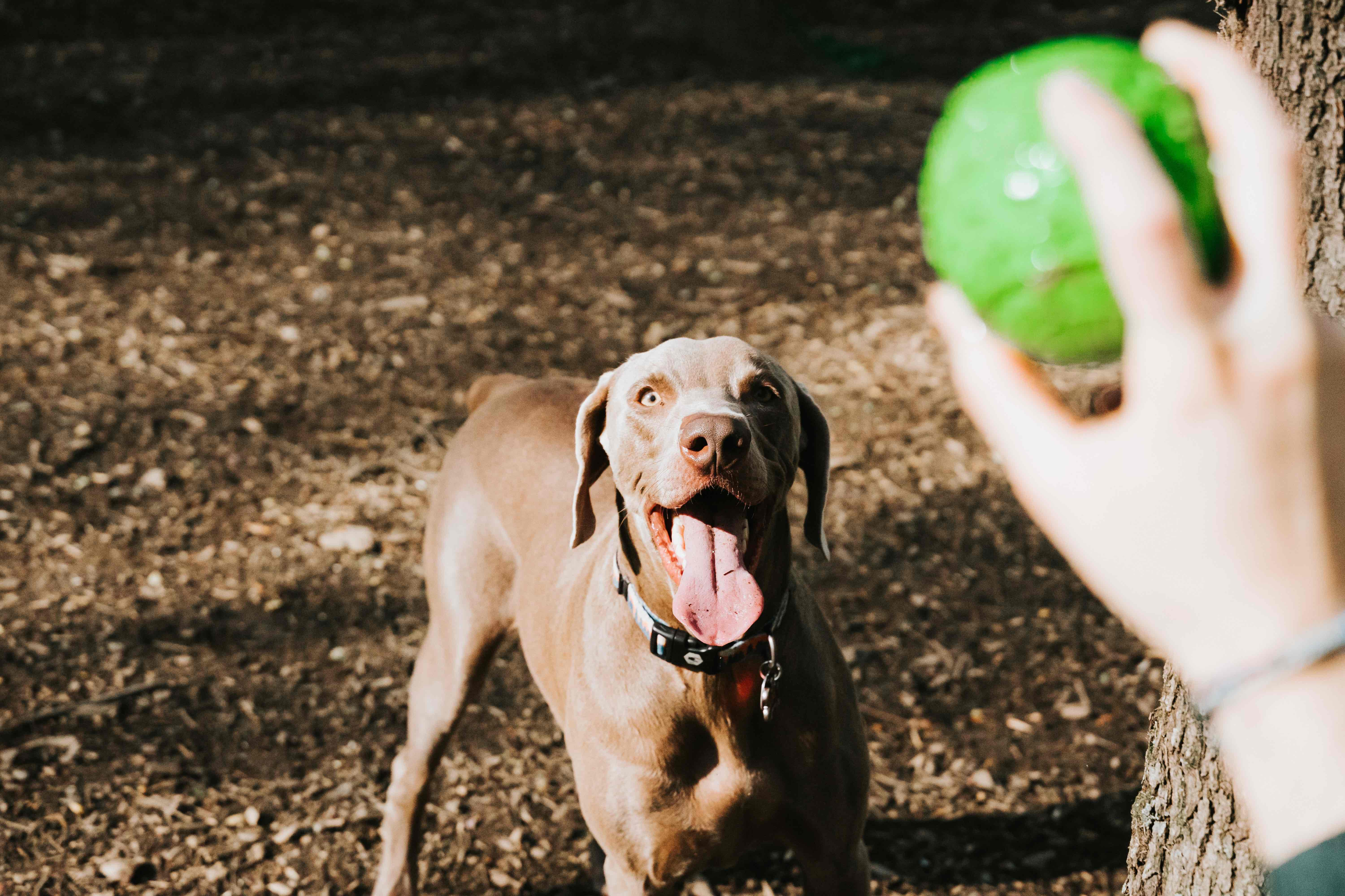 Top Dog Parks in Gold Coast Chicago